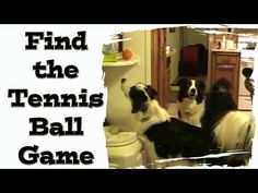 Find the Tennis Ball Game - Fun for dogs Border Collie Puppies, Border Collies, German Shepherd Information, Border Collie Training, Mind Reading Tricks, Fluffy Puppies, Dog Games, Boxer Mix, Wild Dogs