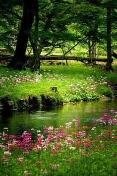 Nature Pictures Country Rivers Ideas For 2019 Beautiful World, Beautiful Gardens, Beautiful Flowers, Beautiful Places, Beautiful Scenery, Amazing Places, All Nature, Spring Nature, Spring Scenery
