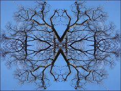 trees - Pixdaus