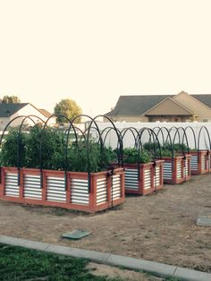 Wood and corrugated steel raised planter boxes, with bird netting to keep out pests. Wood and corrug Metal Raised Garden Beds, Raised Planter Boxes, Garden Planter Boxes, Wooden Garden, Diy Planters, Raised Beds, Diy Garden, Above Ground Garden, Bird Netting