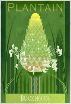 This is a design and illustration project created to launch a botanical art business.