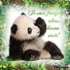 Who Wrote Panda Song Gif #3061 - Funny Panda Gifs| Funny Gifs| Panda Gifs