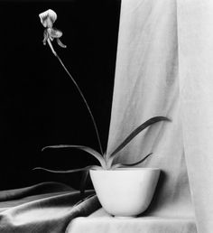 Black and White Photography by Robert Mapplethorpe | Photographist - Photography Blog