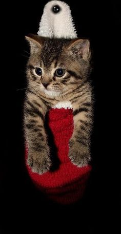 What I want in my stocking...