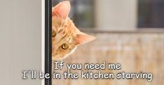 Huzzah! It's the moment we've all been waiting for -- Cheezburger's classic LOLCats! #cats #funnycats #lolcats #catmemes #funnycatmemes #animalmemes Funny Sites, Silly Cats, Funny Cat Memes, Cute Funny Animals, Grumpy Cat, Trending Memes, Animal Memes, Say Hello, Cool Cats