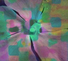 'digitale Blüte' von Peter Norden bei artflakes.com als Poster oder Kunstdruck $20.79