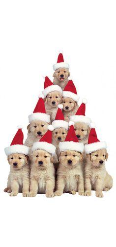 Holiday Golden Retriever Puppies Christmas Card