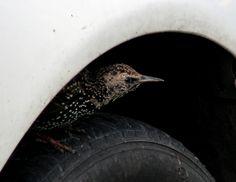 Pneuservis Bird