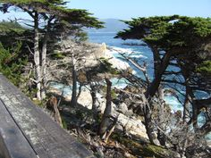 Carmel and Monterey, CA...this is part of the beautiful 17 mile drive...We've driven and loved it.