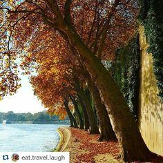 Perfect autumn run near the water   #takemetoparis #takemetoparisapartments #paris #france #europe #river #seine #island  #autumn #leaves #trees #gorgeous #peaceful #travel #instatravel #travelgram #holiday #business #vacation #wanderlust