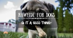 Rawhide For Dogs – Is It A Good Thing?