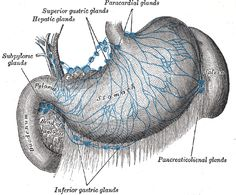 Lymph nodes surrounding the stomach