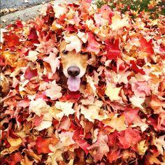 Sun Kissed Autumn