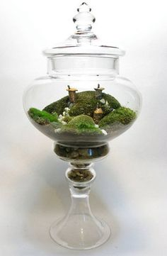 Terrarium Gifts on Etsy Photo 4