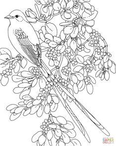 imagens de flores de cerejeira para colorir - Pesquisa Google