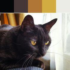 《Black Cat Palette》