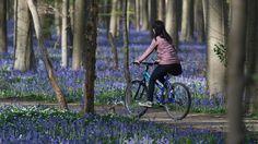 blueforest3.jpg (980×551)