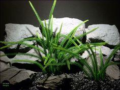 aquarium or reptile enclosure plant: tail grass pap063 plstc. ronbeckdesigns.com   #ron_beck_designs