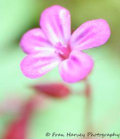stunning petals