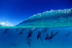 A split level view of dlphins diving under a wave  at Pupukea on the north shore of Oahu, Hawaii. | #dolphins #waves #water