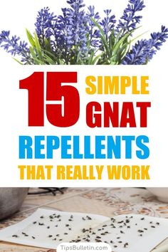 Discover 15 simple homemade gnat repellents that really work. Keep gnats away indoor and outdoor with simple ingredients like vinegar and essential oils. Make a variety of DIY pest control sprays that are safe for kids. Discover 15 simple homemade g
