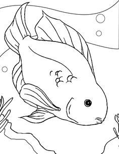 a23ad6d62d059b6e b22c be parrot fish color sheets