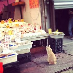 the lonesome cat at the fish market I Love Cats, Cool Cats, Japanese Animals, The Fish Market, Animal Shelter, Farmers Market, Cats And Kittens, Kitty Cats, Cat Lovers