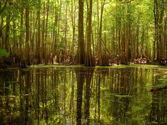 Francis Marion National Forest Hiking Away Com Hit