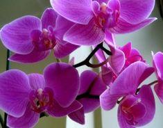 10 домашних растений, выделяющих кислород круглые сутки!