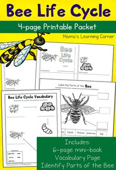 Download a 4-page printable packet about the bee life cycle! Includes mini-book, vocabulary page, and Identify the Parts of a Bee. For K-2nd grade.