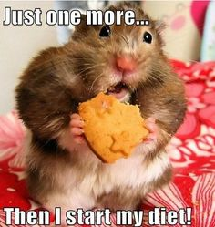 Hamster: Lets do this thing bitch! Me: aww poor little hamster are you ok? you shouldn't be eating like that :) *takes cookie away* *hamster dies* Me: O_O........*walks away and eats cookie*