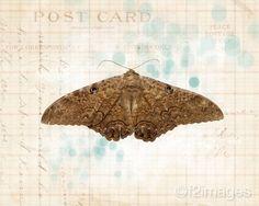 8x10 Moth