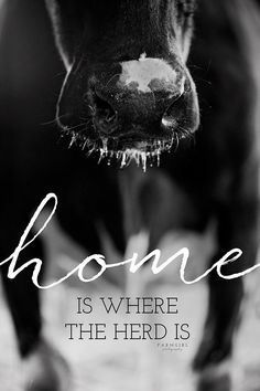 Home is where the herd is Cow Quotes, Farm Quotes, Country Girl Quotes, Horse Quotes, Animal Quotes, Country Girls, Girl Sayings, Smile Quotes, Country Music