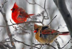 Such beautiful little birds