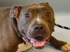 A1045766_MILES 2 BE DESTROYED TONIGHT 8/6/15 OR TOMORROW!! HE ONLY HAS HOURS TO LIVE!!! HOW TERRIFIED, SCARED, HEARTBROKEN N FRIGHTENED THESE POOR ANIMALS MUST BE! WE HAVE A CHOICE, WE CAN BE THEIR VOICE, WE CAN CHOOSE LIFE, NOT DEATH!!! WE R HIS ONLY HOPE IN SURVIVING!! SAY YES TO COMPASSION FOR MILES LIFE!!
