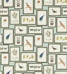 Picture Gallery Aqua Wallpaper from Sanderson Voyage of Discovery Wallpapers Collection. A printed wallpaper featuring realistic picture frames with colourful botanical drawings of various birds, butterflies and foliage on a sandy beige background. Aqua Wallpaper, Feature Wallpaper, Print Wallpaper, Wallpaper Pictures, Fabric Wallpaper, Wallpaper Roll, Kitchen Wallpaper, Wallpaper Online, Bedroom Wallpaper