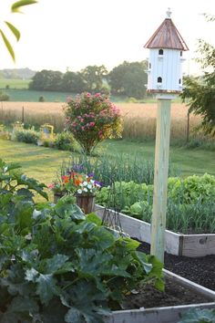 Vegetable Garden at Stone Gable Blog - love the light and the field  beyond, plus everything else...