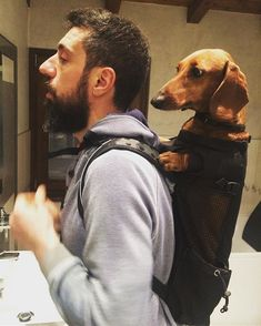 Dog Carrier Backpack. The best backpack for hiking with your dog. Great for hiking with dachshunds! If they get tired, you can carry them! #dachshundstuff #hikinggear