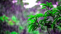 Soothing Sounds of Rain, Piano Music Relaxing - Ambient Music to Sleep and Relax Rain And Thunder Sounds, Rain Sounds For Sleeping, Wallpaper Kawaii, Rainy Day Quotes, Morning Quotes, Rainy Day Photography, Camping In The Rain, Rain Photo, Gardening Zones