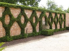 An unsual espalier design, trained against on a brick wall that features a simple water spout and half-circle basin.