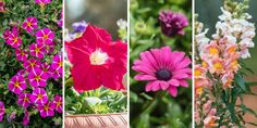 🌺🌼🌷💐 Η θερμοκρασία ανεβαίνει αισθητά και είναι καιρός να περάσουμε περισσότερο χρόνο στον κήπο, στο μπαλκόνι και στη βεράντα μας. Επιλέγουμε τα πιο όμορφα λουλούδια του Μαΐου που μας γεμίζουν με χρώμα και ζωντάνια για να διακοσμήσουμε το σπίτι μας και να ανεβάσουμε τη διάθεσή μας.