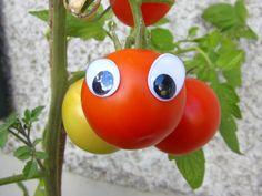 Gemüse mit Wackelaugen – Vegetables with wobbly eyes  #Garten