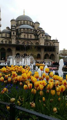 Tulip time in Eminönü, Istanbul