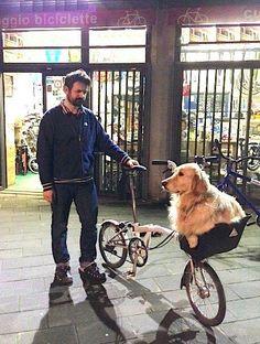 Twitter / skladnichok_ru: Brompton dog. #brompton ...