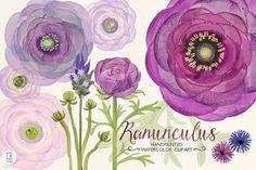 Watercolor purple ranunculus by GrafikBoutique on Creative Market