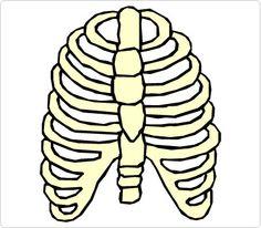 Bones Hand Clip Art | Human Body Clip Art | Pinterest | Art pages ...