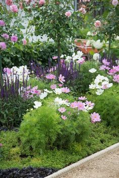 Image result for cosmos along white picket fence