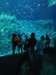 Ocean Park, Aquarium, Concert, Fish Stand, Fish Tank, Concerts, Aquarius