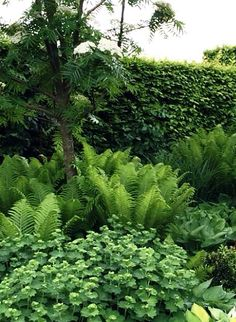 Nice planting for the shade and semishade. (I've croped this picture and missed notice the photographer. Sorry! )
