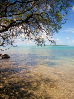 Mangroves and clear, warm water in the Florida Keys #beach #vacation #summer
